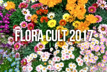 Rose Barni a Flora Cult