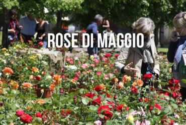 ROSE DI MAGGIO