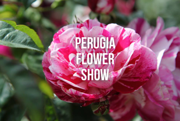 rose barni perugia flower show