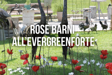 rose barni all'evergreenforte