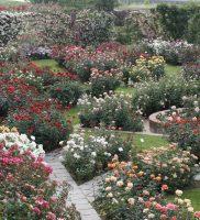 giardinorosebarni