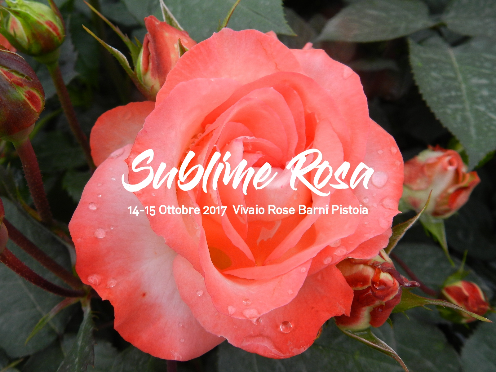 sublime-rosa-autunno-2017-1