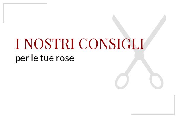 Consigli Rose Barni